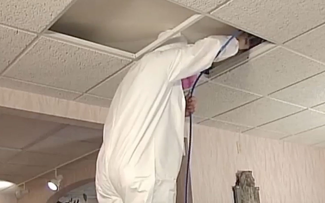 Dratech Services: Mold Remediation – Video